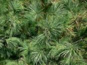 Zöld karácsony: Hulladék, maradék