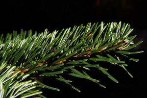 Zöld karácsony: Karácsonyfa