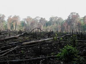 Globális küzdelem az erdőirtás ellen