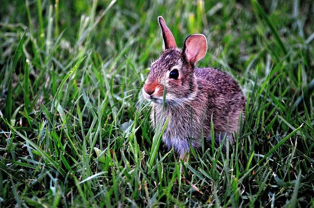 Élő húsvéti nyuszi? Most mit tegyünk?