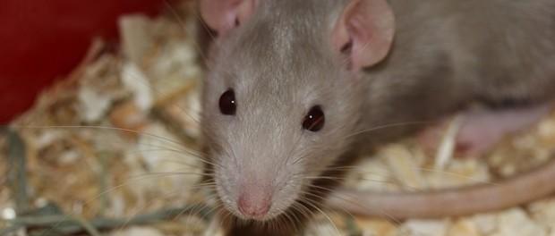 Ma van a kísérleti állatok védelmének világnapja