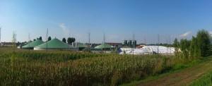 """Biogáz erőmű fogja hasznosítani a torontói állatkert """"végtermékeit"""""""