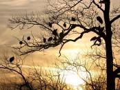 Május 10: Madarak és fák napja