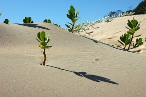 Tegnap volt az Elsivatagosodás és kiszáradás elleni küzdelem világnapja