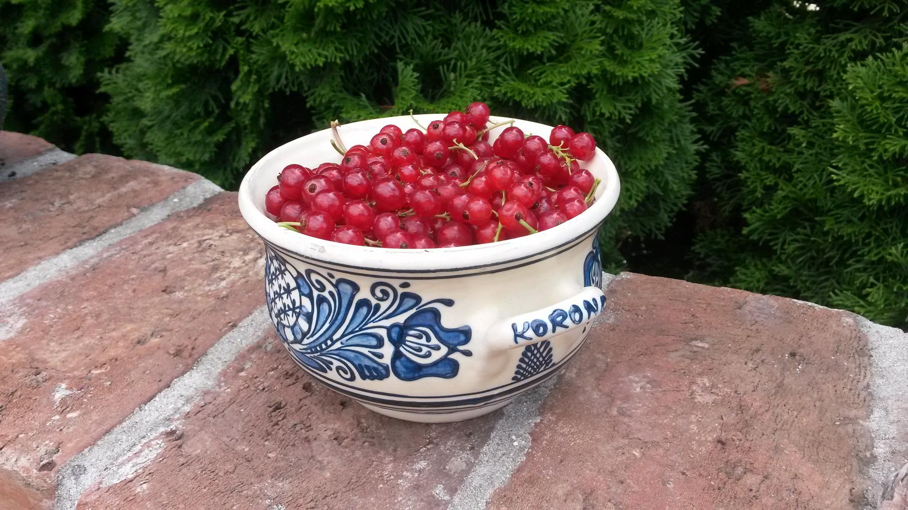 Frissen a kertből: piros ribizli