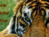 Holnap: Nemzetközi Tigris Nap
