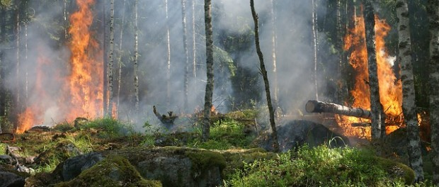 Vigyázz az erdőre!