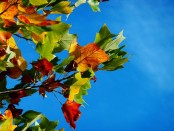 Őszi szünetre