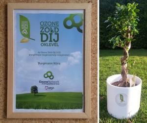 1 éves a Zöld Matek blog