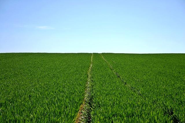5 hazai zöld oldal, amiket érdemes követned