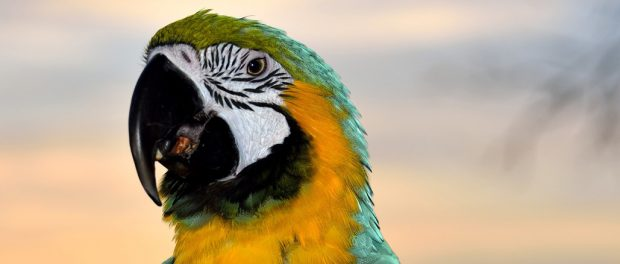 Tudtad? Érdekes és meglepő tények a madarakról.