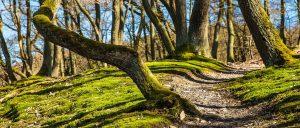 10 érdekes tanösvény nemzeti parkjainkban