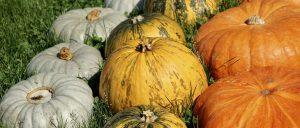 Teremts őszi hangulatot!