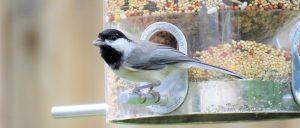 Készíts ötletes és környezetbarát madáretetőt