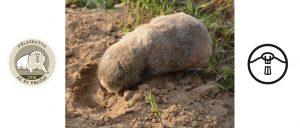 A föld alatti szőrmókok titkos élete