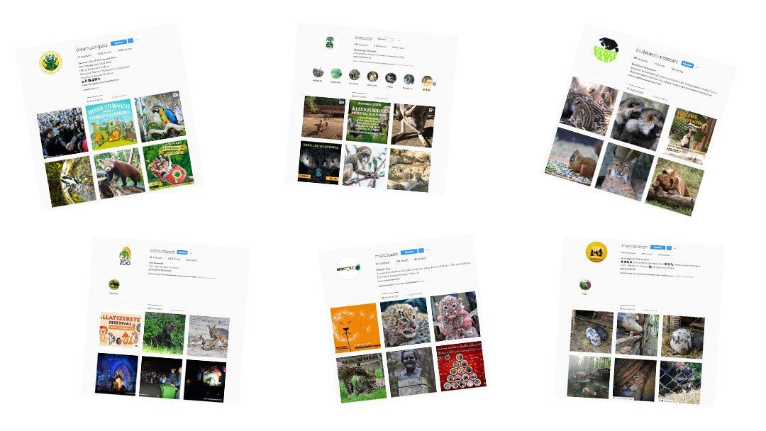 Állatkerti kedvencek az Instagramon