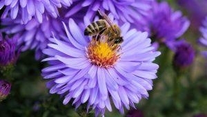 Hogyan és miért kell védeni a méheket?