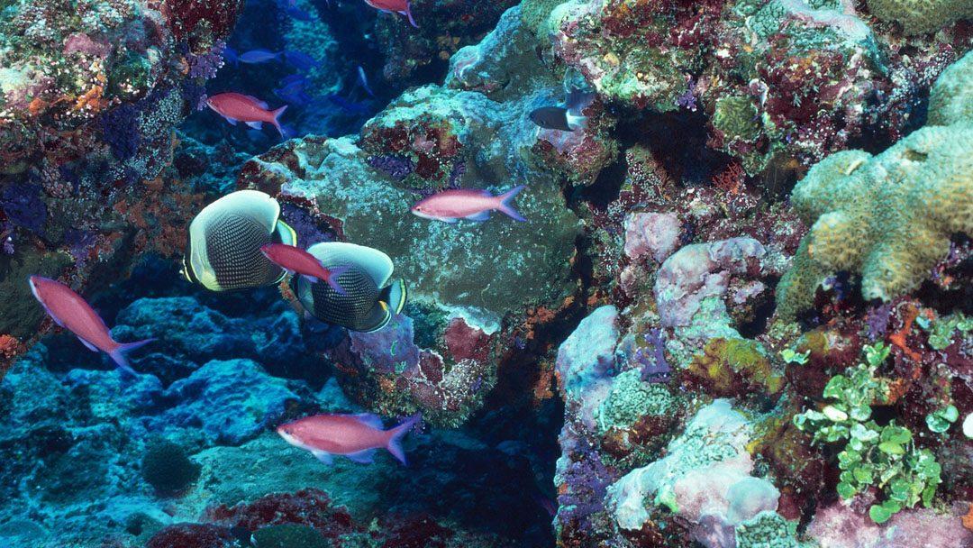 A korallzátonyok világa
