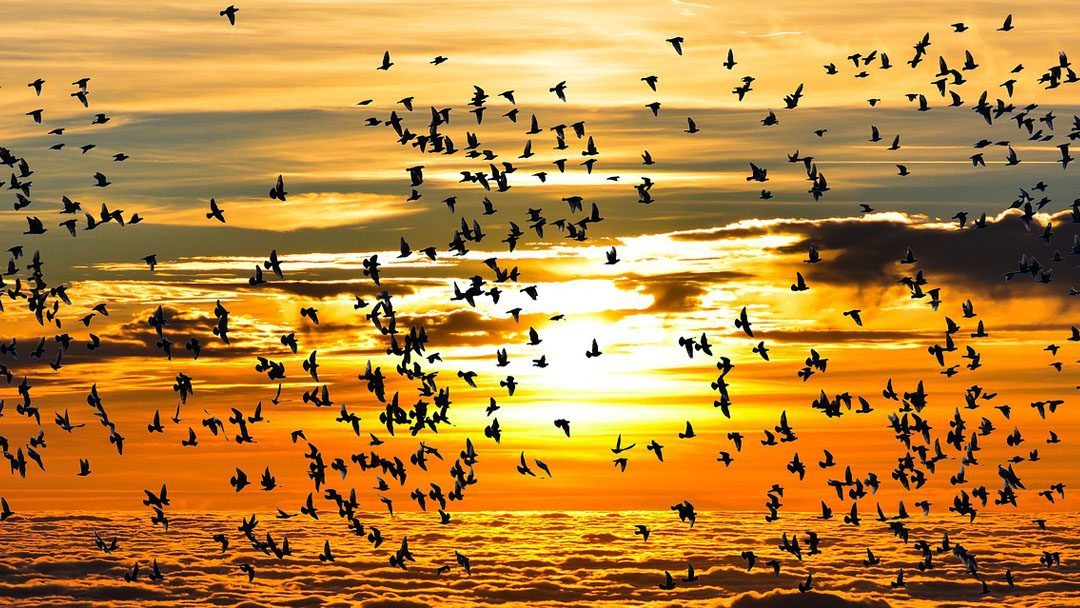 Így segíts a madaraknak