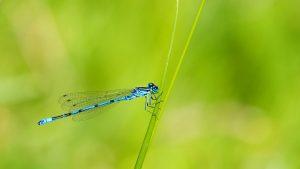 Sokan vannak, mégis védeni kell őket - a rovarok