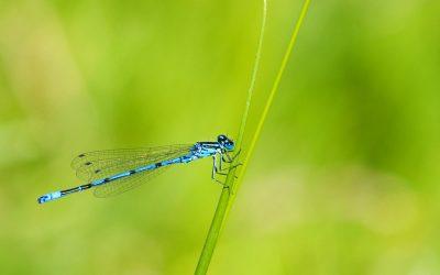 Sokan vannak, mégis védeni kell őket – a rovarok