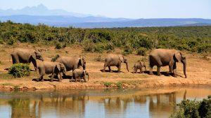A világ legnagyobb szárazföldi állatait is védeni kell