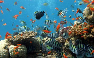 Hogyan és miért kell védenünk a halakat