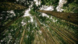 Azok a csodálatos fák