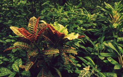 Változatos és érzékeny növényvilágunk