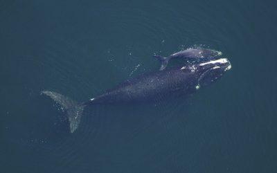 Az óceánok óriásai – a bálnák