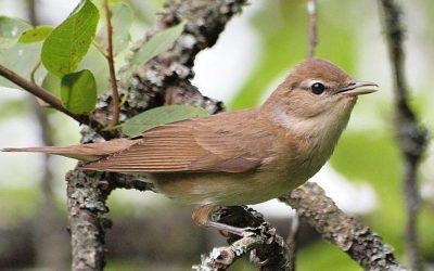 Csökkenő hazai madárállományok