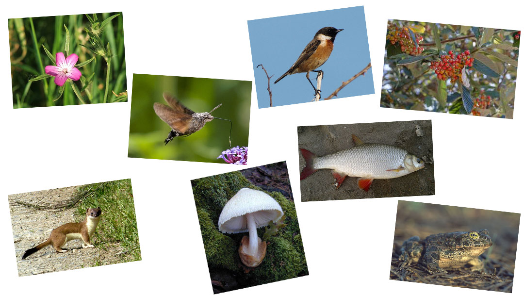 Együtt a 2021-es Év fajai