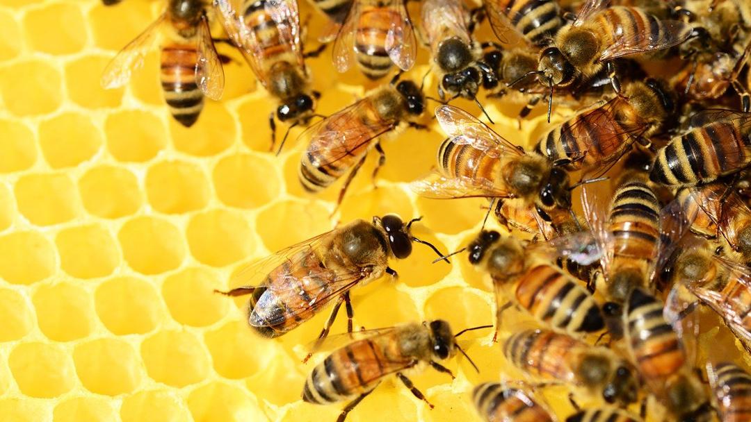 7 megdöbbentő adat a méhek munkájáról